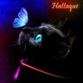 Hattaque